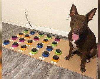 Логопед научила собаку говорить 29 слов