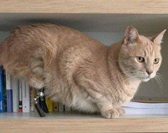 Кот с протезами стал интернет-звездой
