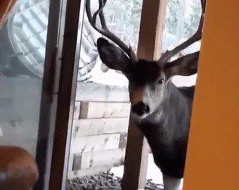 Женщину оштрафовали на  за кормление диких оленей