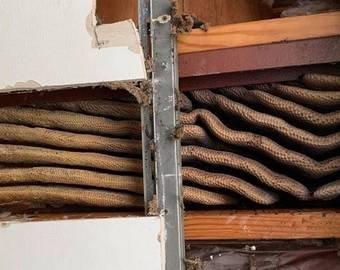 Пчелы прятались под потолком квартиры и заготовили 45 килограммов меда