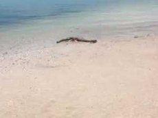 Раскрыта тайна найденных на берегу океана останков «морского чудовища»