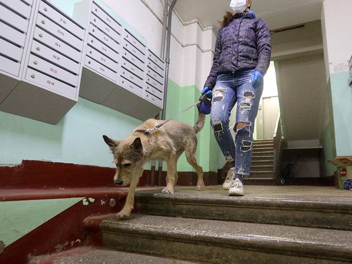 Москвичам рассказали как гулять с собаками в пандемию