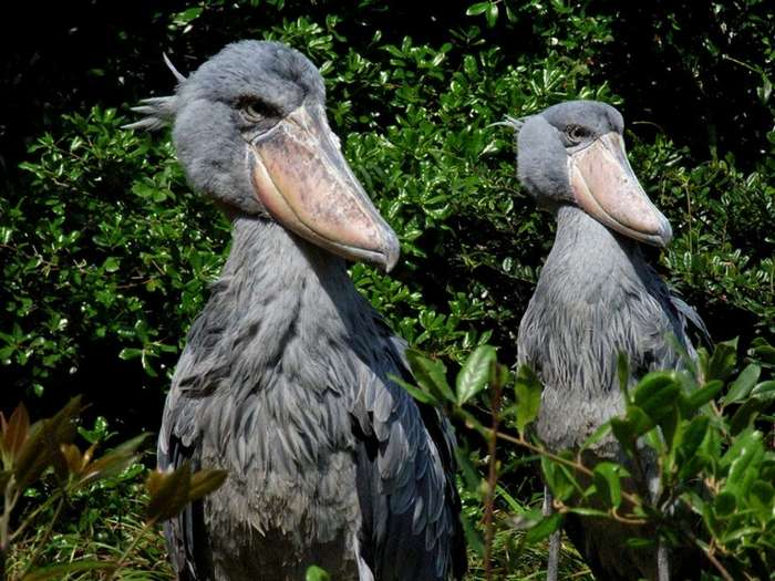 Самые удивительные птицы мира