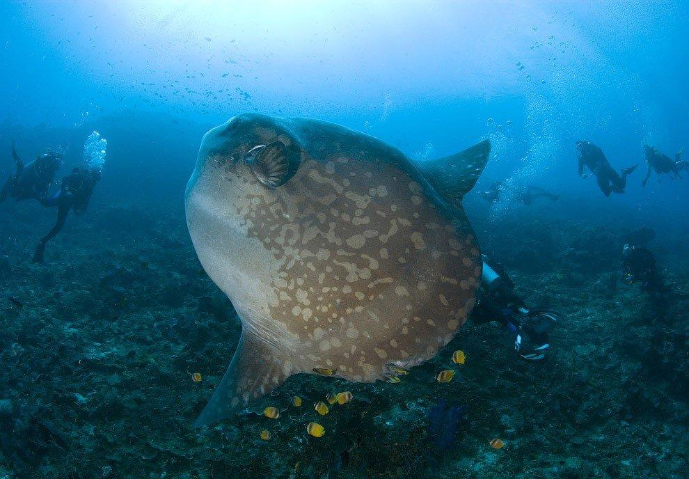 Десять самых необычных океанских рыб