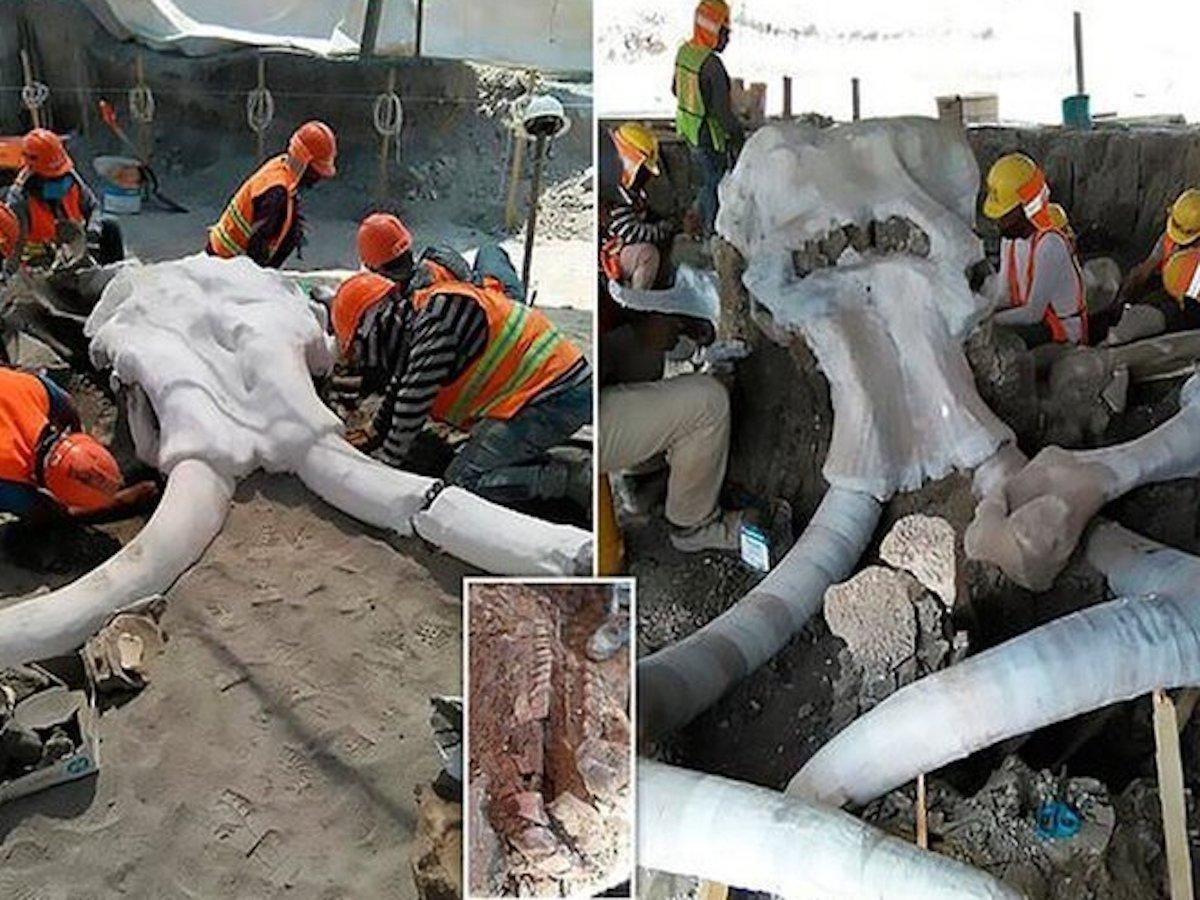 В Мексике обнаружено огромное кладбище мамонтов