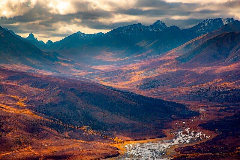 Природа завораживает: фото победителей GDT Nature Photographer of the Year 2020