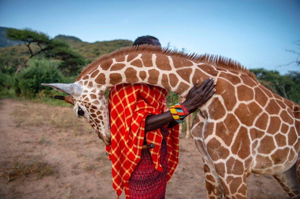 Лучшие работы конкурса BigPic Natural World Photography 2020