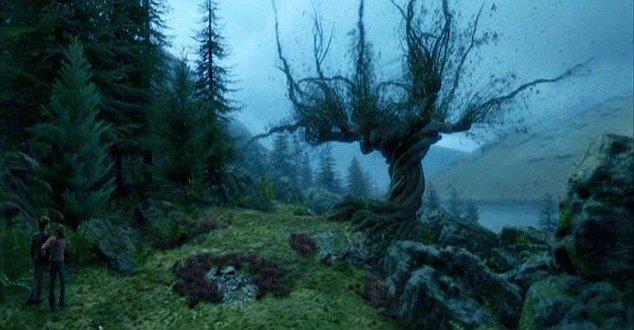 Самые известные в мире деревья, прославившиеся в кино, музыке и живописи