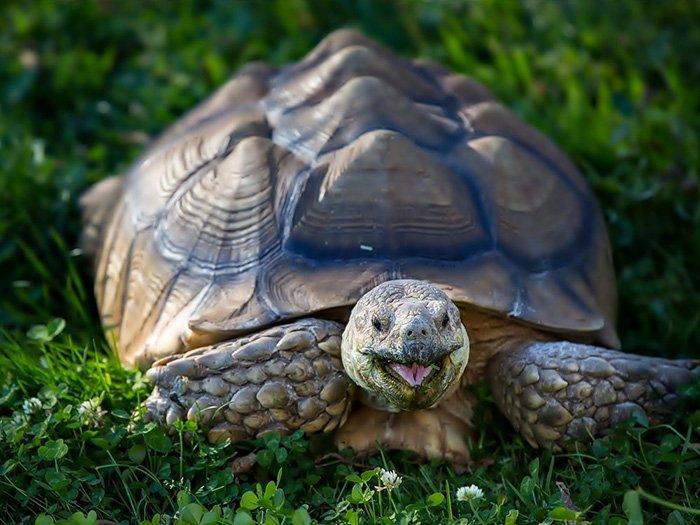 Всемирный день черепахи 23 мая