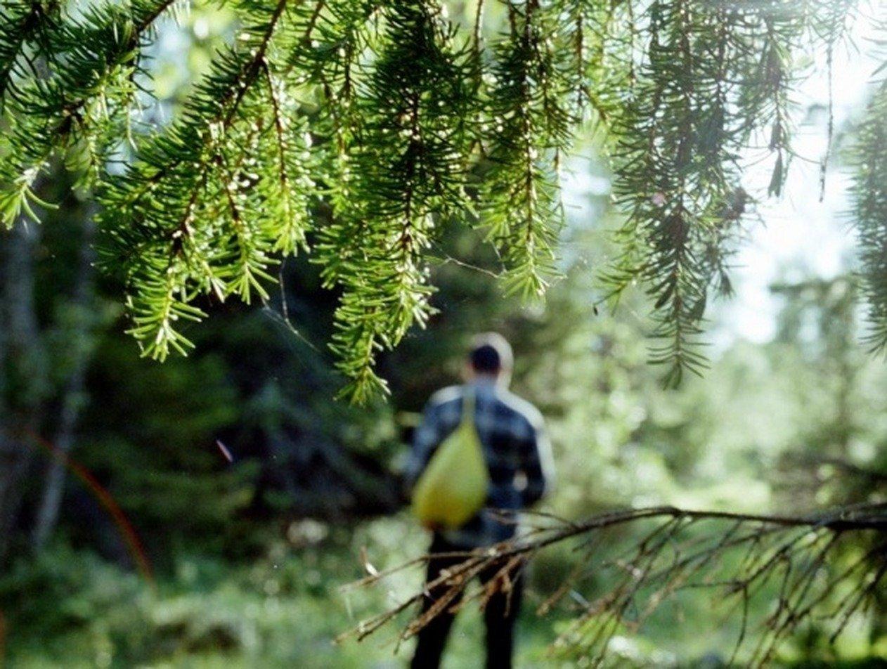 Приморец с тремя детьми ушел в лес, чтобы «переждать коронавирус»