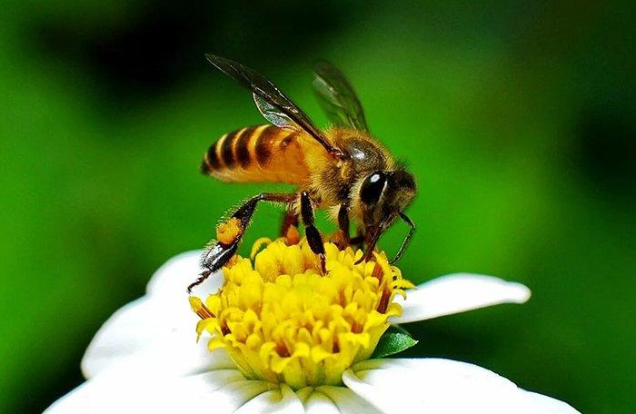 Всемирный день пчел 20 мая
