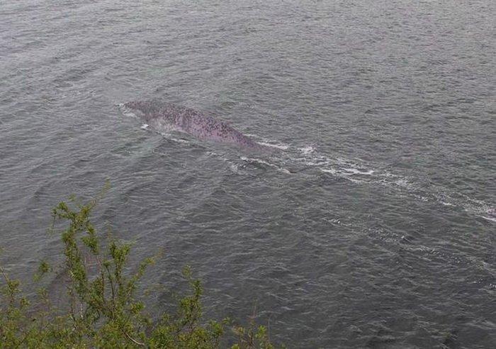 На озере Лох-Несс обнаружили странное существо
