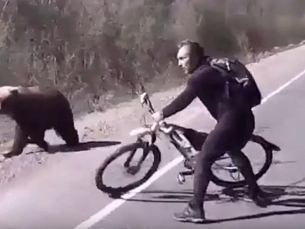 Отбился от медведя велосипедом
