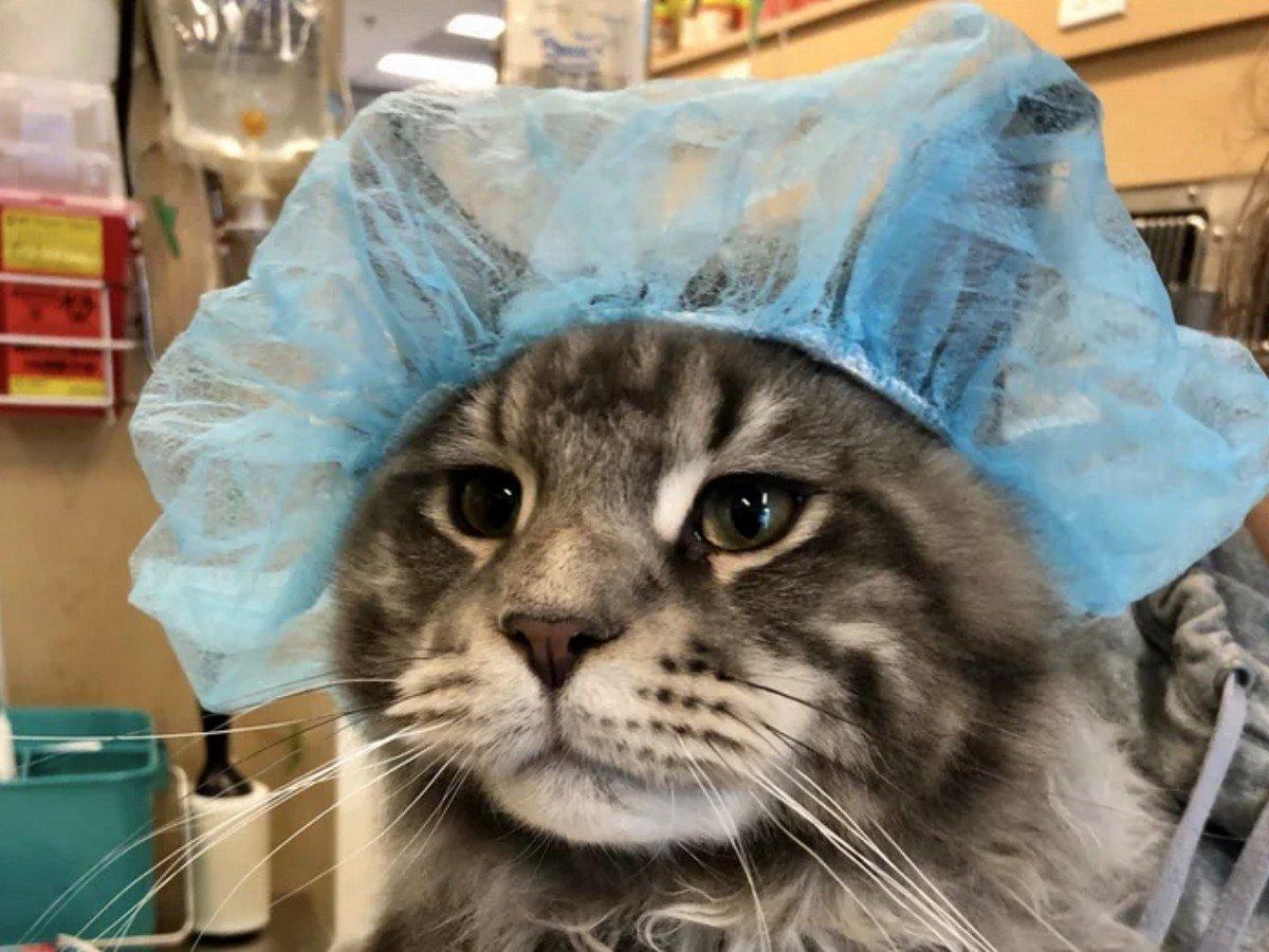 Кот спрятался от ветеринара и стал интернет-звездой