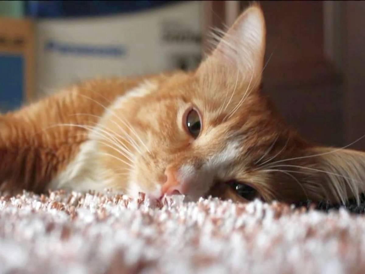 Хозяин, поющий колыбельную коту, стал интернет-звездой