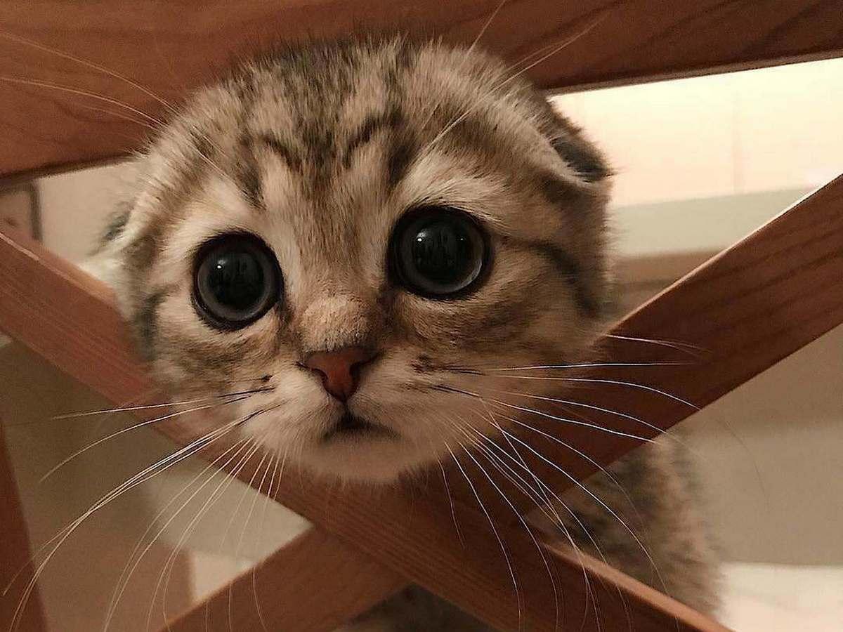 Растолстевший на карантине кот развеселил интернет-пользователей