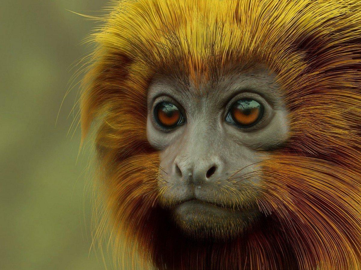 Чирикающая обезьяна набирает популярность в Сети