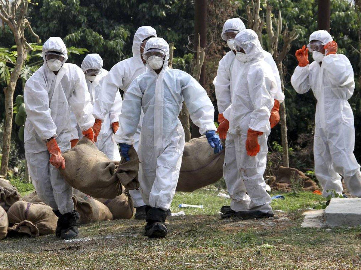 ВКитае обнаружили новый штамм свиного гриппа