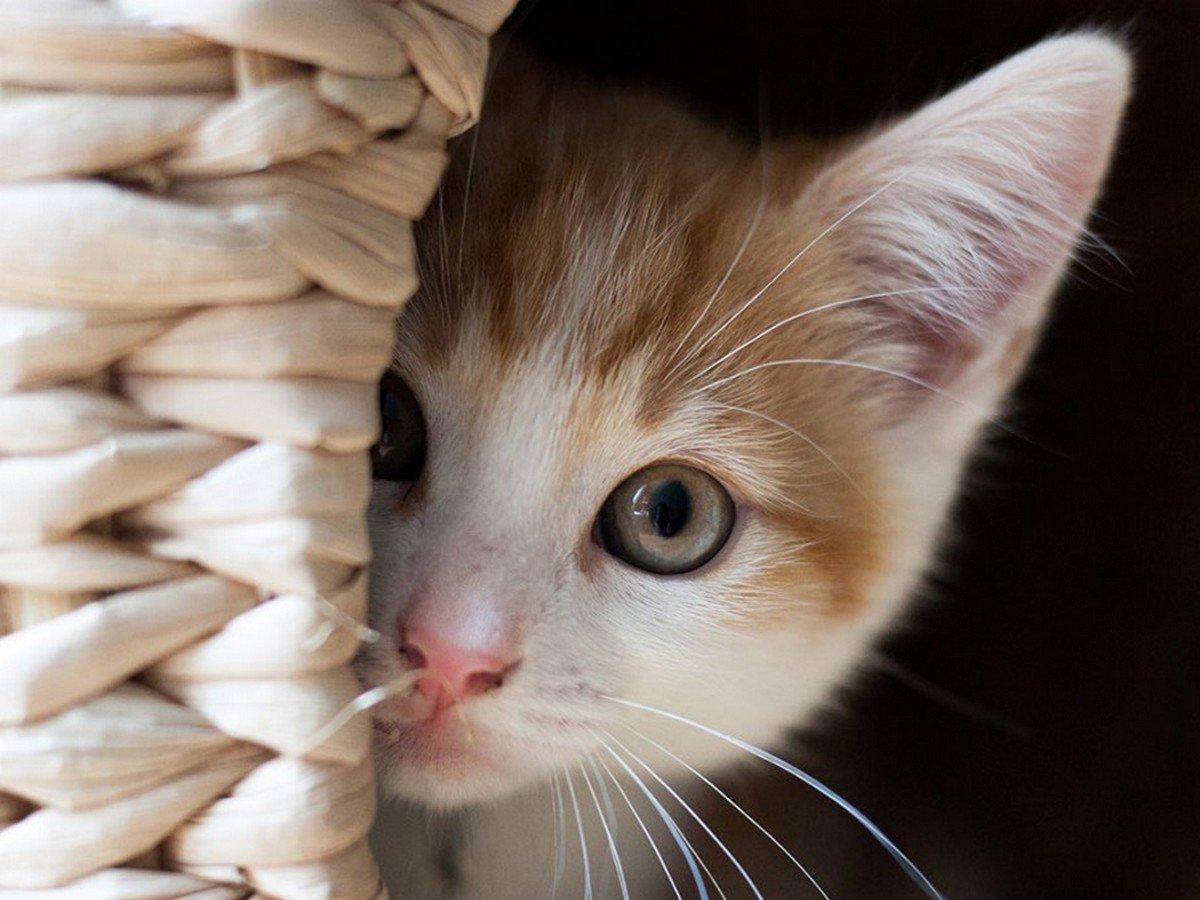 Призрак умершего кота попал на видео