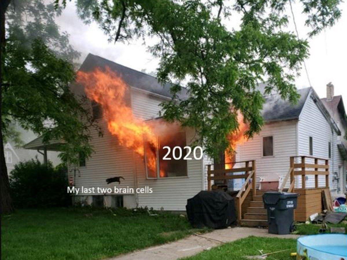 Горящий дом и спасающаяся кошка: пользователи выбрали новый мем 2020 года