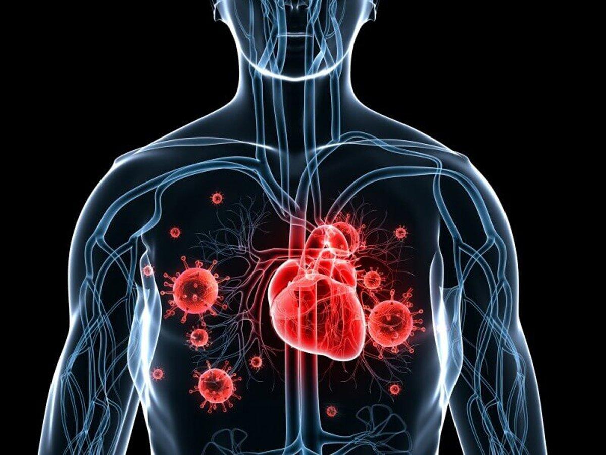 Академик РАН пояснил, что случается с сердцем при коронавирусе