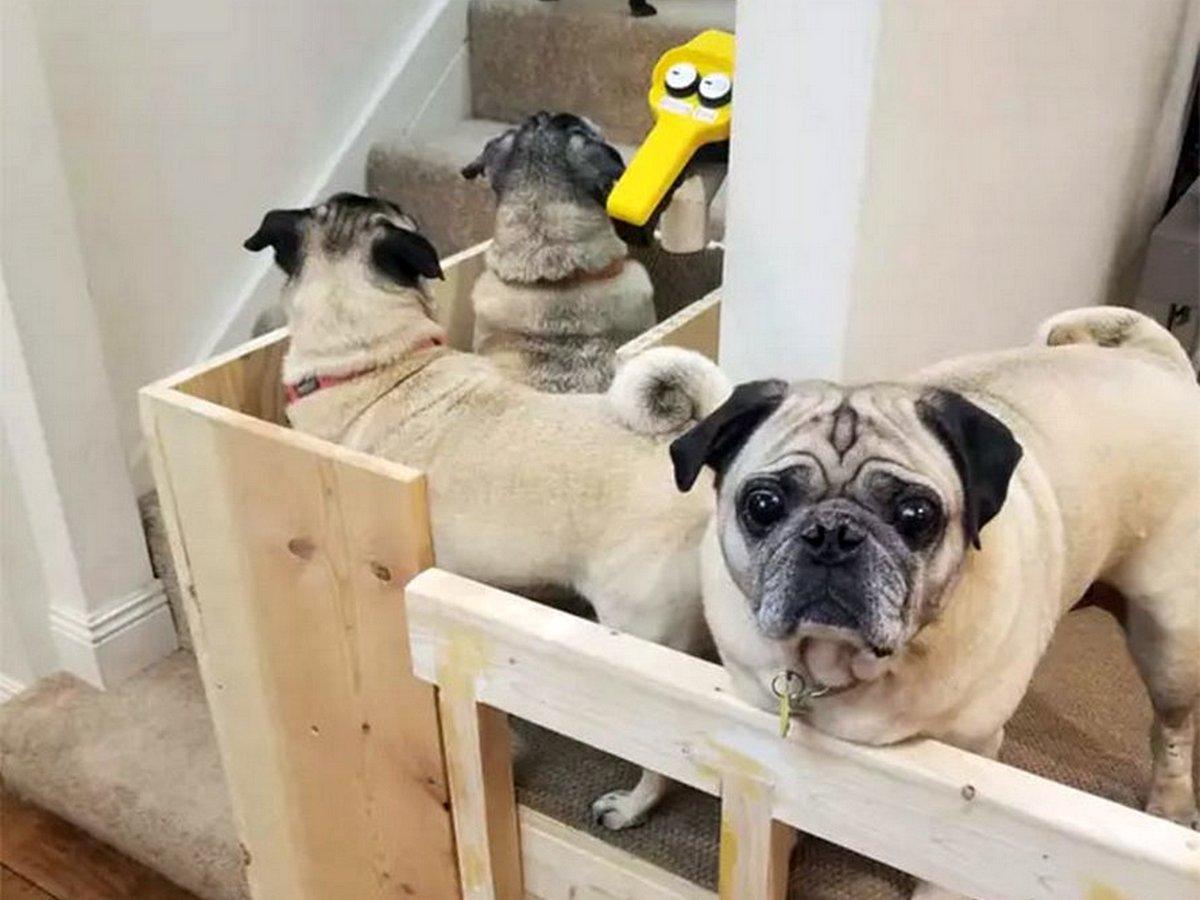 Лифт для собак своими руками