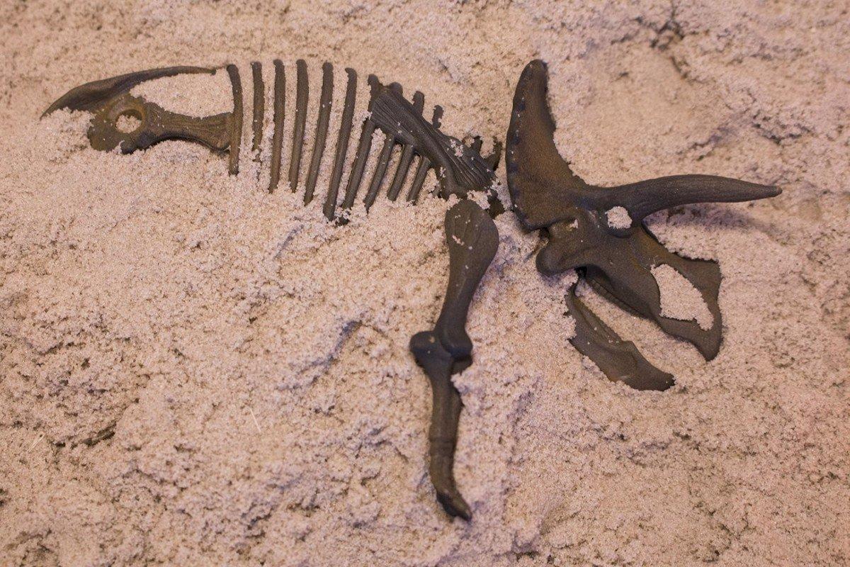 Малоизвестные факты о динозаврах