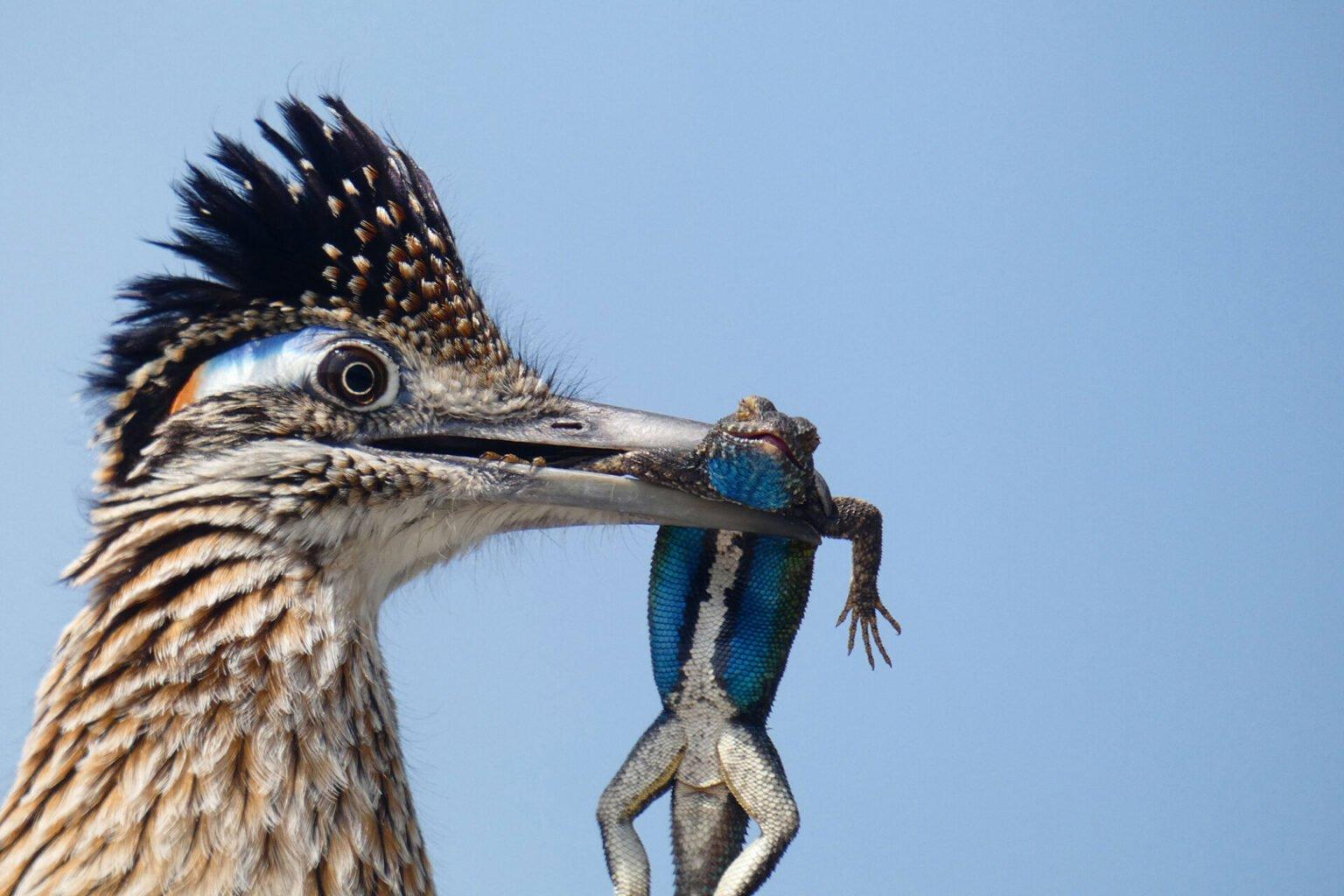 10 лучших фотографий птиц с конкурса Audubon Photography Awards 2020