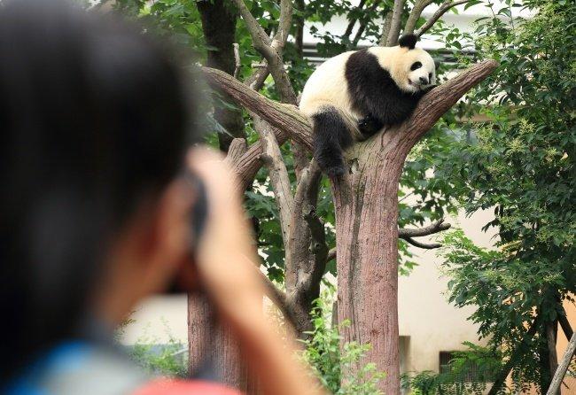 Беременные животные, попавшие в объектив камеры