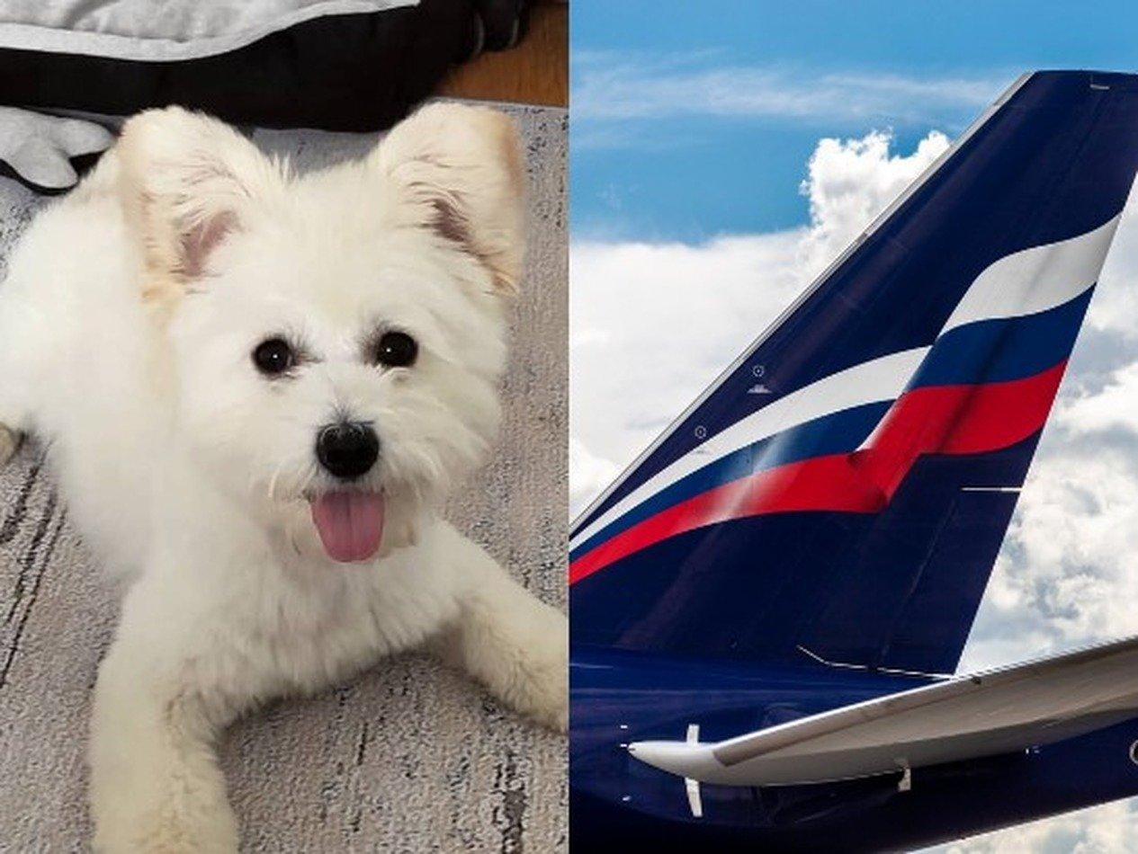 «Аэрофлот» объяснил, почему не вывез из Китая российских собак и кошек