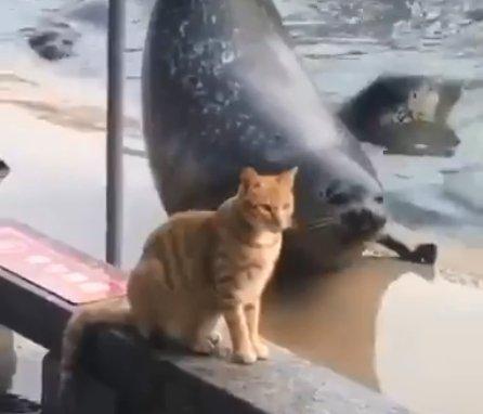 Кот и тюлень стали звездами в Интернете