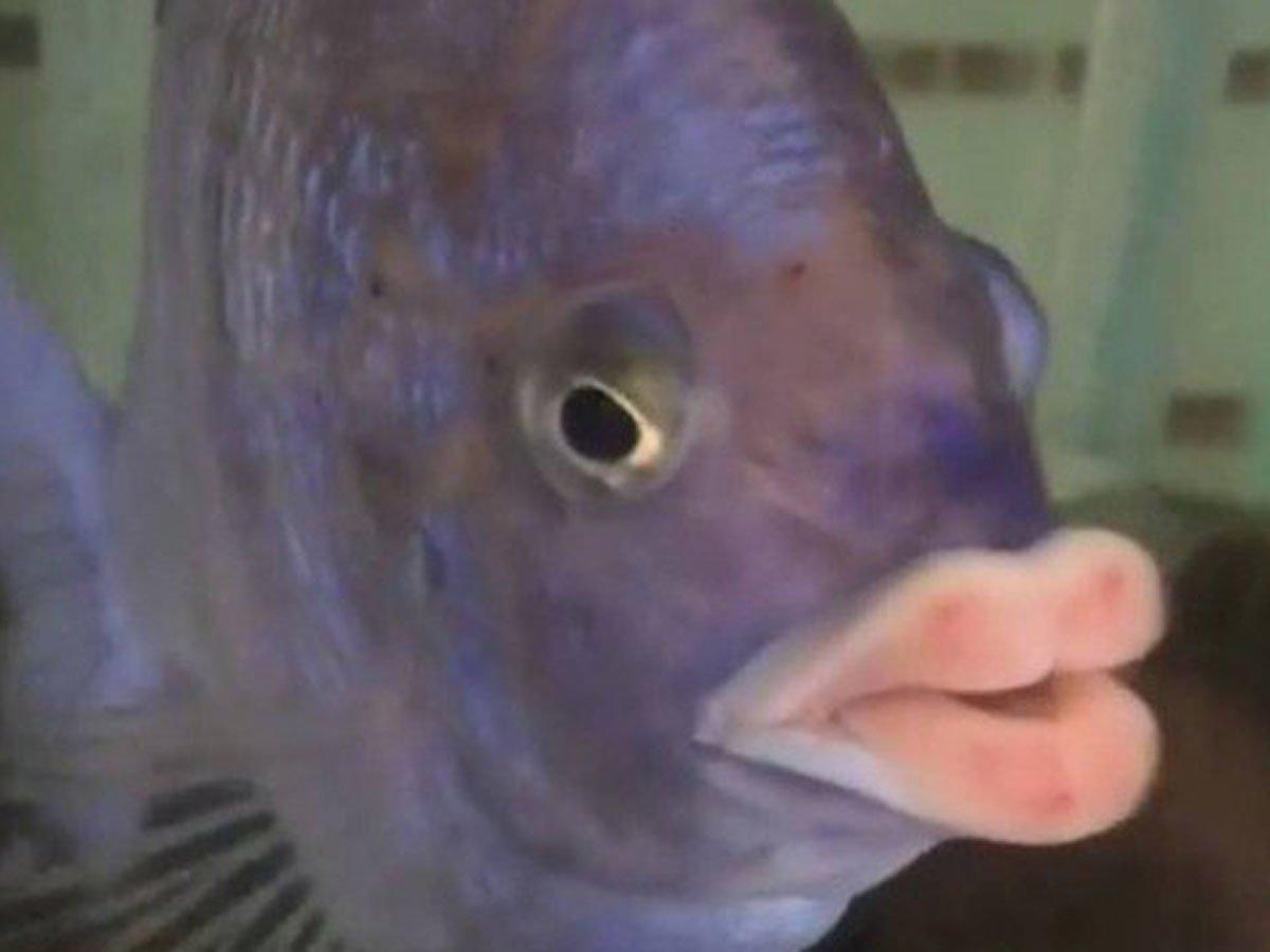 В Сеть выложили снимки рыбы с человеческими зубами и ртом