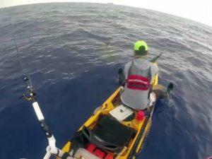 Акула проплыла под каяком