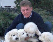 Глава Приморья раздает щенков акита-ину в интернете