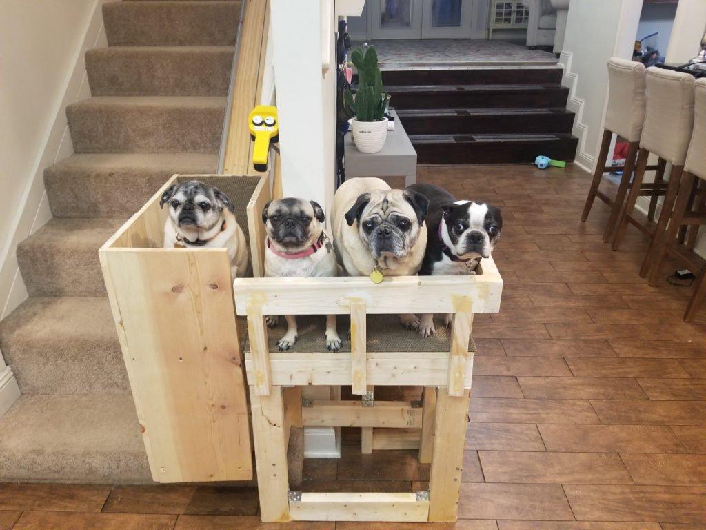 Лифт для собак
