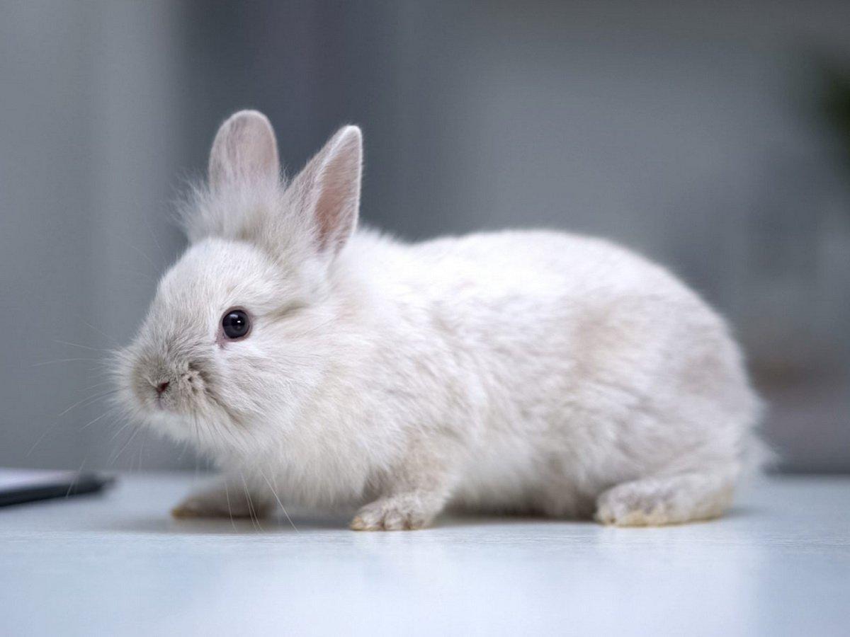 Тушь ценой в жизнь: почему бренды отказываются от тестирования косметики на животных