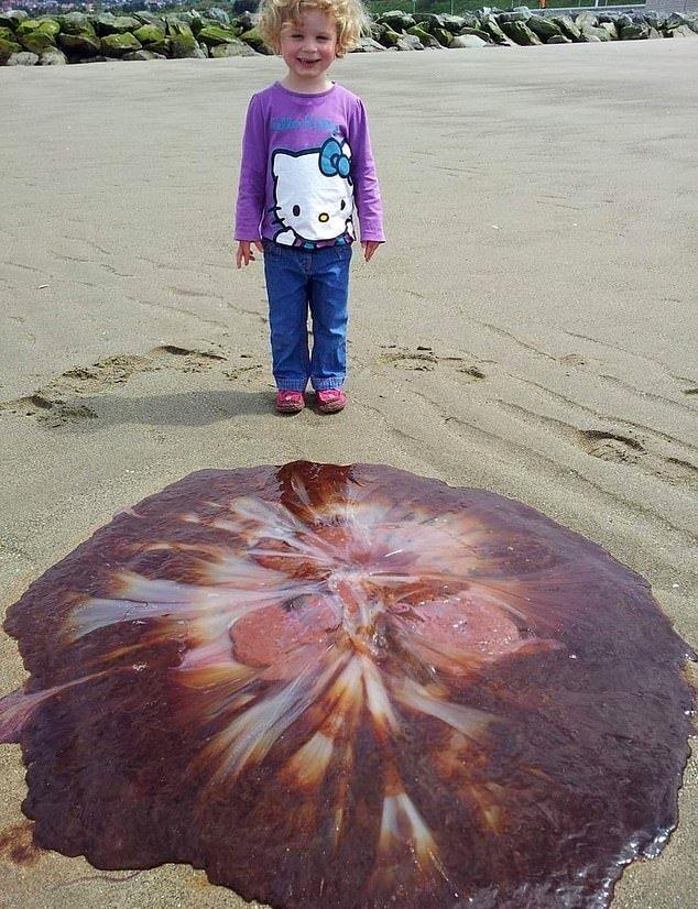 Ядовитая медуза на берегу