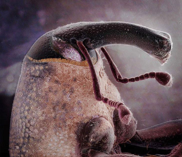 Необычные портреты насекомых