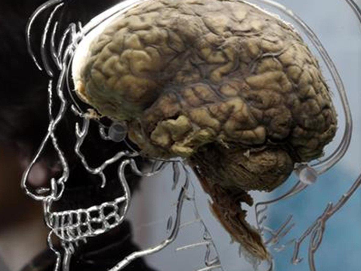 Раскрыта тайна человеческого мозга