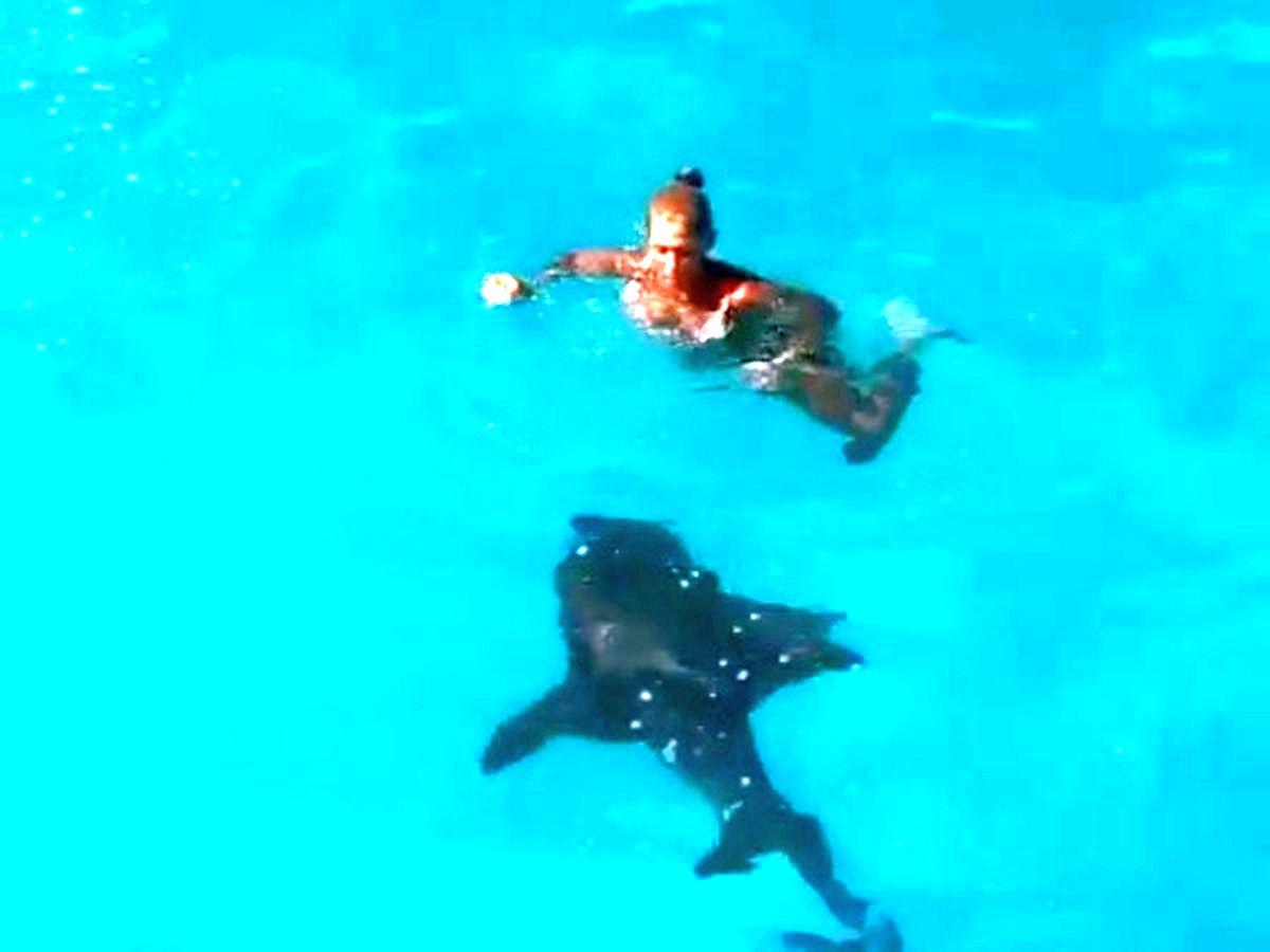 Девушка и акула