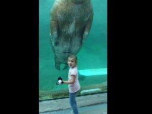 Огромный морж привел в восторг маленькую девочку