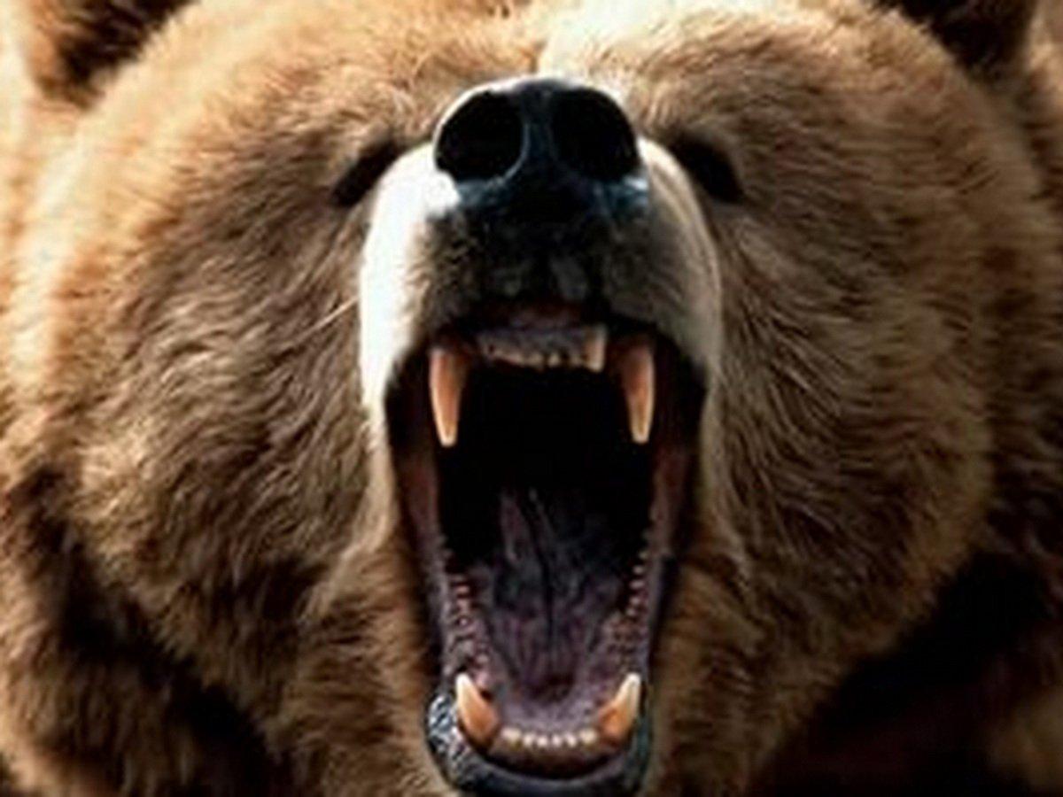 Медведь загрыз ребенка в вольере