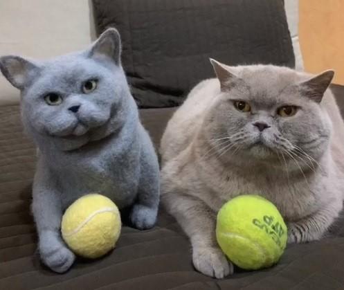 Котик и его шерстяная копия