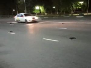 Массовая гибель ворон в Саратовской области