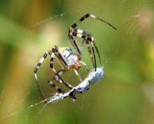 Нашествие пауков в Приморье сняли на видео