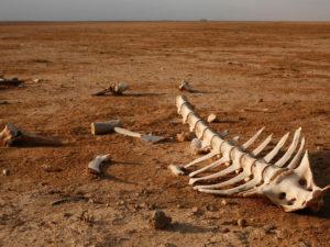 шестое массовое вымирание