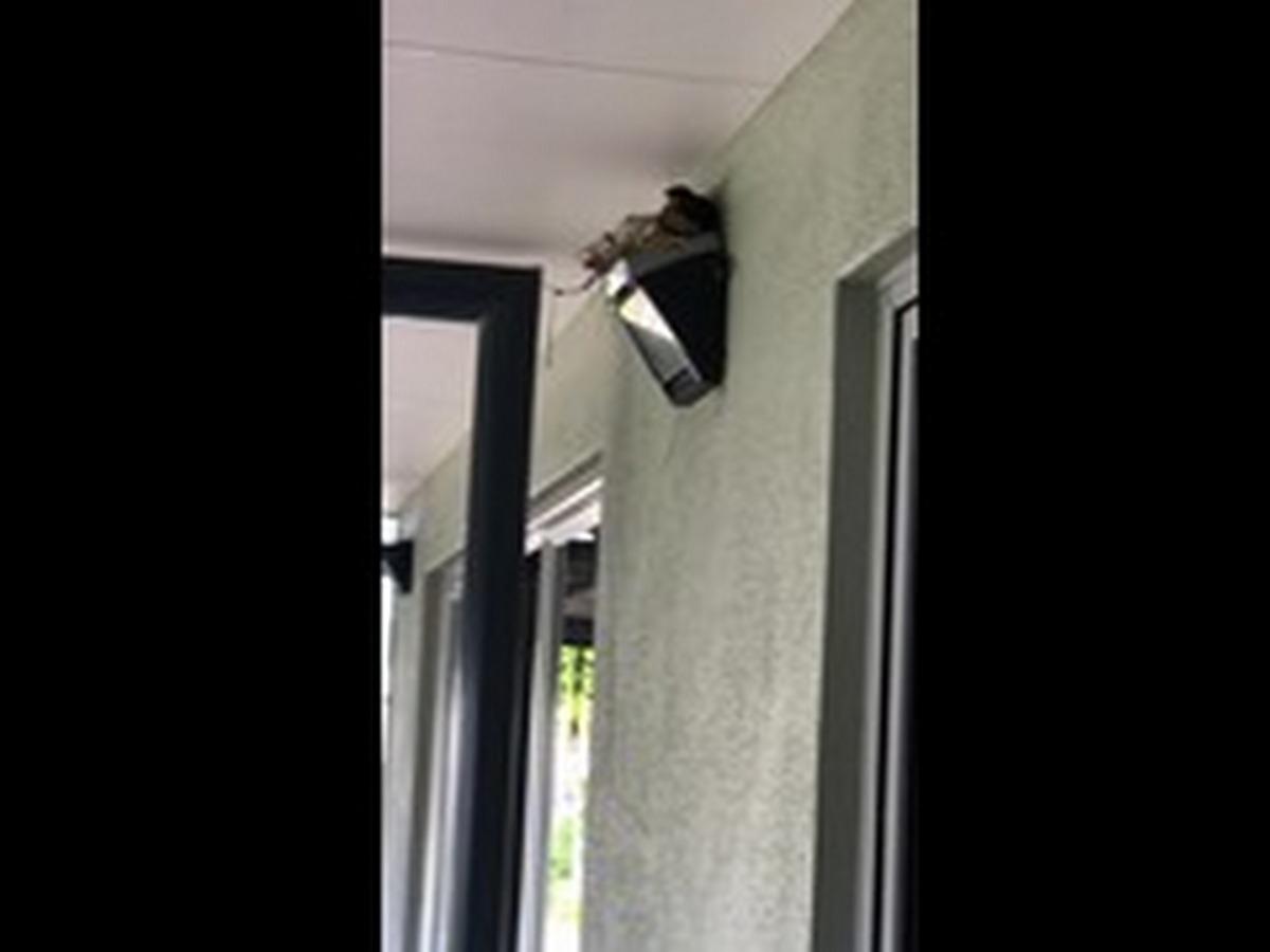 Женщина построила дрозду гнездо над дверью