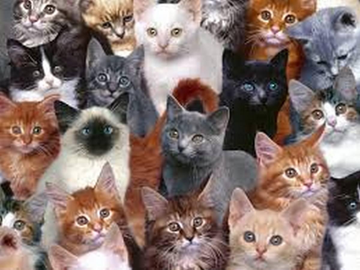 Десятки кошек