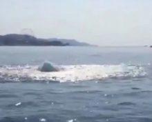У береговой линии в Сочи на видео сняли