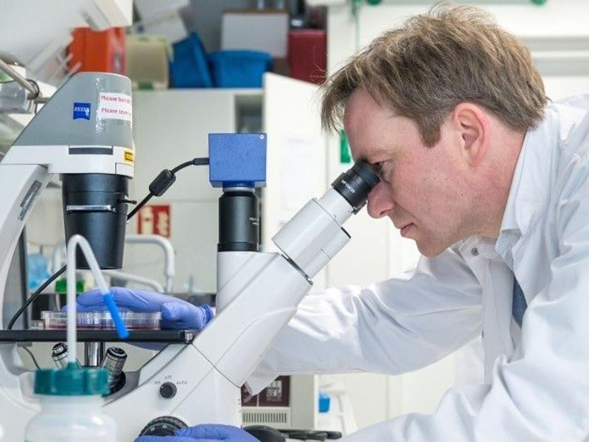 иммунитет COVID-19 лихорадка денге